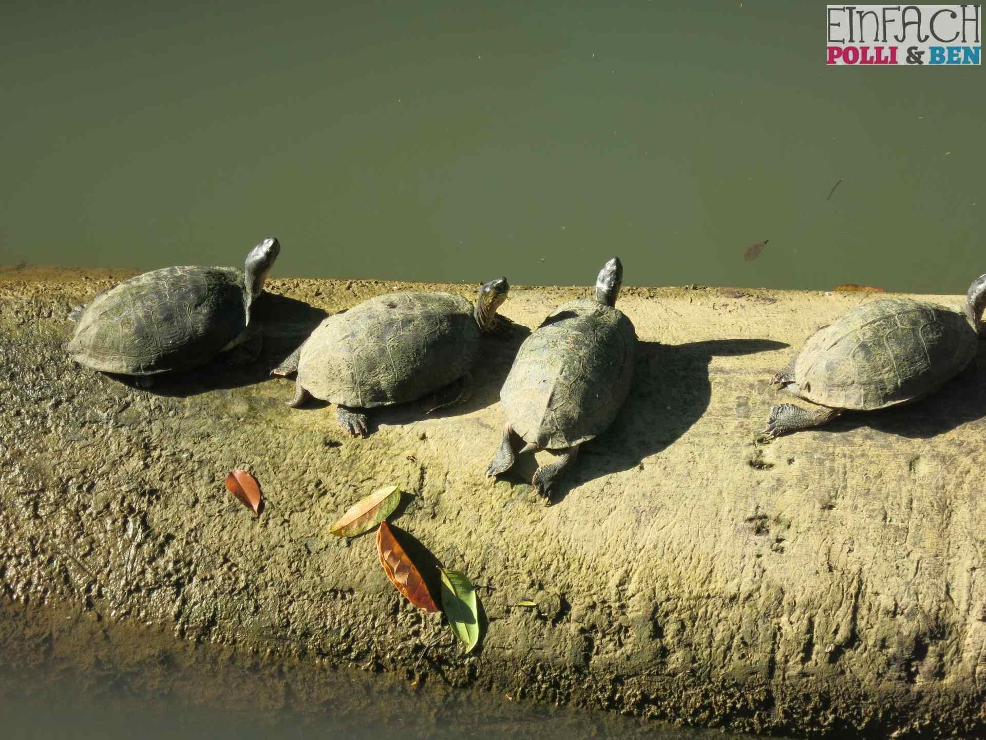 Hochzeitstag Ben und Polli in Costa Rica Schildkröten Sonne