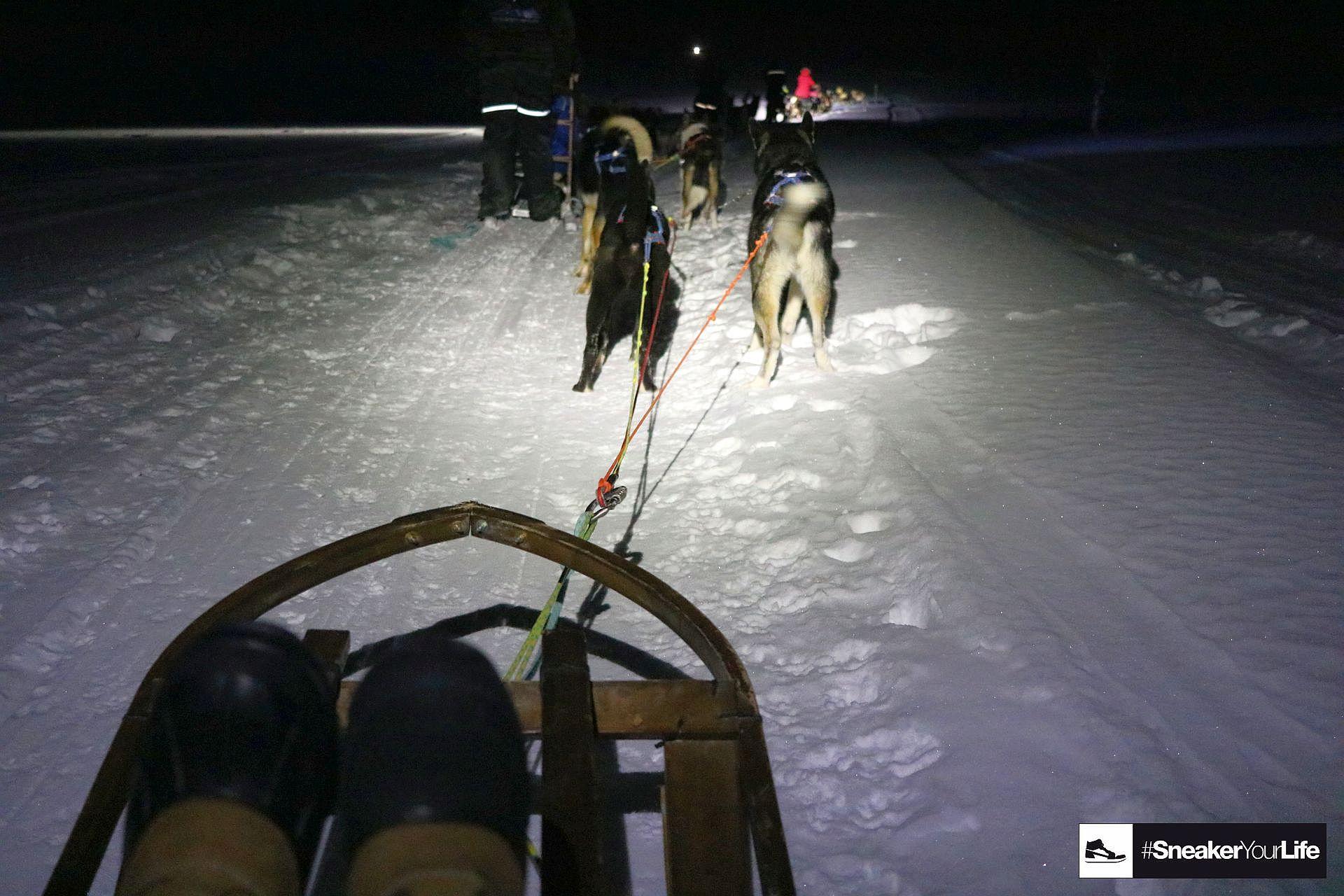 Husky Schlittenfahrt Tromsö